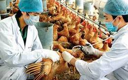 Thủ tướng Chính phủ chỉ đạo tập trung phòng chống vi rút cúm A/H7N9
