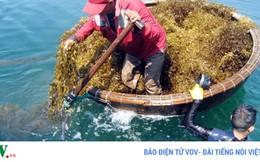 Rong biển, hướng đi mới để phát triển thủy sản bền vững
