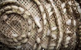 Ngoài khăn lụa KhaiSilk, Trung Quốc còn cung cấp những gì cho ngành dâu tằm tơ Việt Nam?