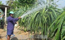 Cây làm giàu cho nông dân vùng đất khó Tiền Giang