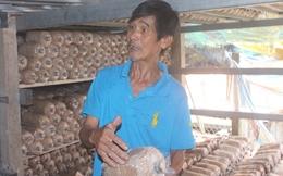 Tỷ phú nhờ trồng nấm bào ngư