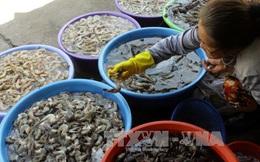 Ứng dụng công nghệ cao, phát triển nuôi trồng thủy sản Phú Quốc