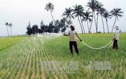 Mang giống tỏi Lý Sơn về trồng, thu 300 triệu đồng/ha