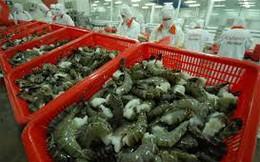Australia tiếp tục áp điều kiện cho tôm nhập khẩu