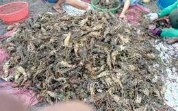 Hỗ trợ người nuôi tôm hùm tỉnh Phú Yên