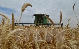 FAO: Giá lương, thực phẩm thế giới tăng cao nhất trong 2 năm