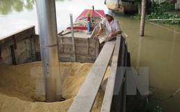 Xuất khẩu gạo của Việt Nam lại rơi vào vòng xoáy trầm lắng
