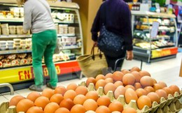 """Nông dân và các nhà bán lẻ Hà Lan chật vật với bê bối trứng """"bẩn"""""""