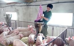Đã 'giải cứu' được hơn 200.000 tấn thịt lợn tồn trong dân