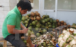 Bến Tre: Nghịch cảnh xứ dừa không thể sống nhờ cây dừa