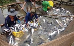 Truyền thông nước ngoài làm xấu hình ảnh cá tra của Việt Nam
