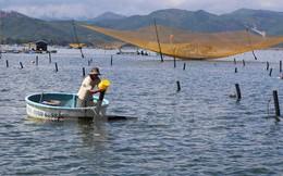 Hoàn thiện dự thảo kế hoạch phát triển ngành tôm đến năm 2025