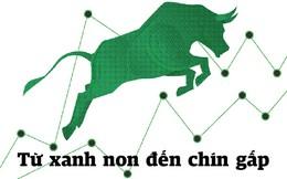 Cổ phiếu ngân hàng: Từ xanh non đến chín gấp