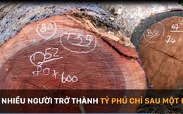 """Loại gỗ quý được đại gia mua 600 triệu đồng ở Gia Lai từng """"dậy sóng"""" ở Đắk Lắk"""
