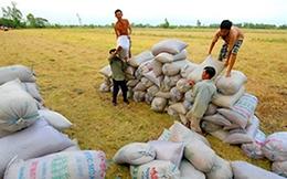 Việt Nam cứ say sưa xuất khẩu gạo số 1, 2 để làm gì?