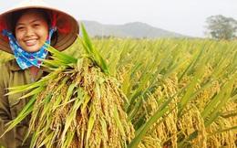 Giống cây trồng Trung ương đặt mục tiêu lãi ròng 198 tỷ đồng năm 2017