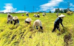 Phát triển doanh nghiệp nông nghiệp được lợi gì?