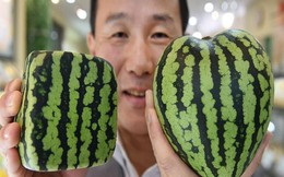 220 triệu đồng/chùm nho: Vì sao người Nhật làm được?