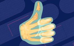 Gãy ngón chân sẽ tự khỏi mà không cần bó bột: Hóa ra đây là 5 điều mọi người hay hiểu lầm về xương
