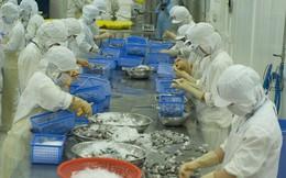 Bạc Liêu: 361 cơ sở thu mua chế biến tôm nghi vấn có bơm chích tạp chất
