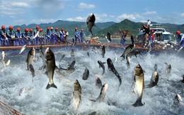 Thủy sản Nam Việt (ANV): Quý 3 lãi 114 tỷ đồng, cao gấp 3 lần cùng kỳ