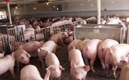 Chăn nuôi Phú Sơn điều chỉnh kế hoạch kinh doanh từ lỗ sang lãi, trình phương án tạm ứng cổ tức tỷ lệ 50%