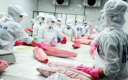 Australia thông báo kiểm soát nhập khẩu đối với việc xử lý CO trong cá ngừ và cá chẽm