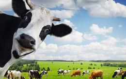 SSI Research: Ngành sữa 2020 tiếp tục tăng trưởng ở mức 1 chữ số, thương vụ VNM-GTN sẽ hoàn tất và thúc đẩy doanh thu hợp nhất tăng 5%