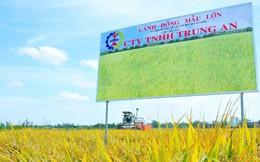 Đối tác cung cấp gạo vào siêu thị Vinmart chuẩn bị niêm yết trên sàn chứng khoán