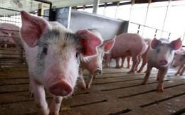 Chăn nuôi Phú Sơn (PSL) chốt danh sách cổ đông tạm ứng cổ tức bằng tiền tỷ lệ 50%