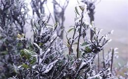 Bắc Bộ và Bắc Trung Bộ rét đậm, rét hại có nơi dưới 3 độ C
