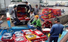 Đầu năm trúng đậm cá ngừ, ngư dân Bình Định thu tiền tỷ!