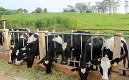 Doanh thu của GTNfoods tăng mạnh nhờ Mộc Châu Milk, quý 4 lỗ vì giảm quy mô các mảng không cốt lõi phục vụ định hướng nông nghiệp sạch
