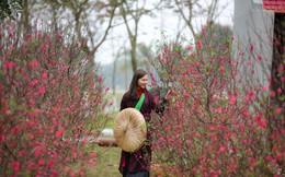 Toàn cảnh đường hoa xuân Mậu Tuất 2018 rực rỡ tại khu đô thị Ecopark và Phú Mỹ Hưng