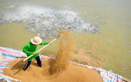 Thức ăn chăn nuôi Việt Thắng lỗ hơn 62 tỷ đồng quý 1