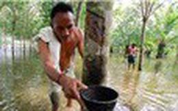 Thái Lan khuyến khích nông dân chặt bớt cây cao su để đẩy giá
