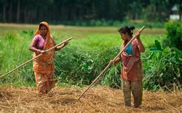 Bangladesh mong muốn nâng kim ngạch thương mại với Việt Nam lên 1 tỷ USD