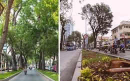 Chùm ảnh: Đường Tôn Đức Thắng trước và sau khi hàng trăm cây xanh bị đốn hạ để phát triển thành phố
