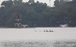 12 con thiên nga đã được ô tô chở sang một hồ khác tại Hà Nội