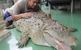 """Thú nuôi đẳng cấp """"cộp mác"""" Indonesia: cá sấu dài 1m8, thích được xoa cằm, ăn cá tươi, được chủ đánh răng mỗi ngày"""