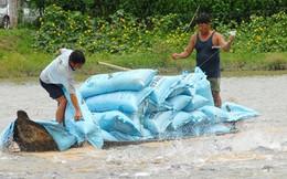 Thiếu hụt trầm trọng giống cá tra