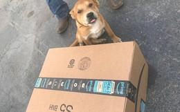 Amazon sa thải nhân viên vì ném thẳng kiện hàng vào cún cưng của khách