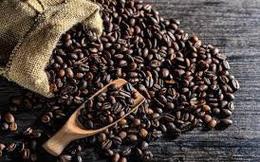 Niên vụ cà phê 2017- 2018 có khả năng mất mùa