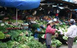 Giá rau xanh giảm mạnh sau Tết, người trồng rau lỗ nặng