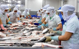 Tương lai ngành cá tra xuất khẩu đang nằm trong tay chính các doanh nghiệp