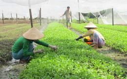 Giá trái cây, rau củ tăng giảm thất thường