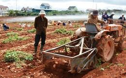 """Nông dân """"méo mặt"""" vì nông sản rớt giá"""