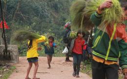 Ảnh: Trẻ em vùng núi Quảng Bình chân trần kéo nhau lên rừng hái 'lộc trời'