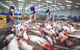 Xuất khẩu cá tra sang Trung Quốc tăng mạnh, một số thị trường khác khó khăn