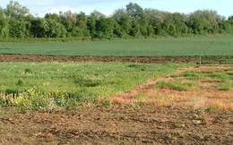 Gần 700 ha đất công lọt trong một dự án